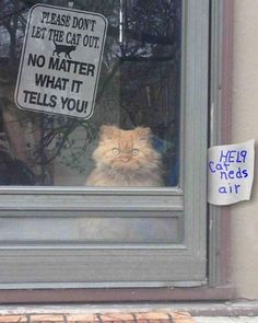 The expression on this kitty's face is priceless!