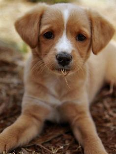 Penelope the Jack Russell Mix | One of the cutest dogs I have ever seen