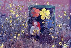 Warhol in flowers.