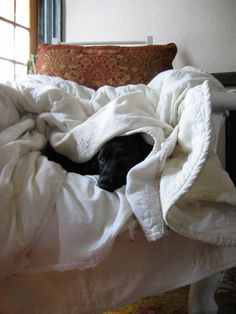 just ignore me, im not really here. jack looooved being wrapped in sheets and blankets!