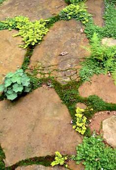 Landscape Design Tip: Lay stones directly on the earth's surface for a soft walk, no cement or mortar is necessary. Allow grass, moss and small flowers to grow in the cracks. #landscapedesign