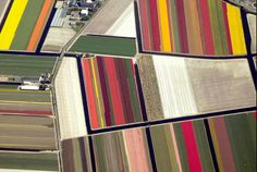 think I can convince Farmer to switch crops and farm tulips? so pretty... aerial view, northern Holland