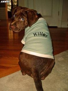 Caption This: _____ #captionthis #dog #funny #dog