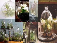 Wednesdays with Amy--Terrarium Centerpieces--Savannah Event Designer--Harvey Designs--Savannah, GA