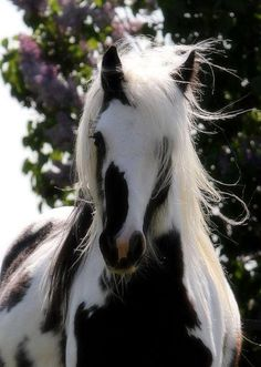 You don't have to be beautiful to be perfect... But tht doesn't matter because all horses are beautiful:)