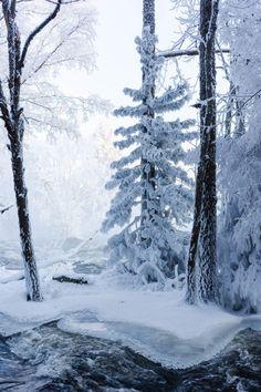 ponderation: Cold Trees by Anssi karilahti - winter lover I Love Snow, I Love Winter, Winter Night, Winter Snow, Winter White, Winter Christmas, Prim Christmas, Winter Magic, Winter's Tale