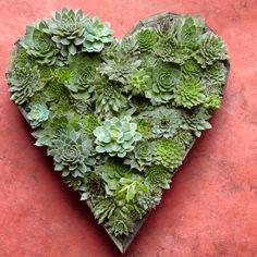 Web Shop - Flora Grubb Gardens - Succulent Heart Garden, $149.00 (http://shop.floragrubb.com/succulent-heart-garden/)