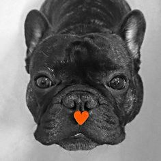 heart on dog  ♡... Re-pin by StoneArtUSA.com ~ affordable custom pet memorials for everyone.