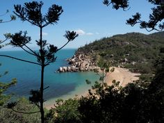 a trip to magnetic island is an absolute must when in australia! among the beautiful scenery and great beaches there are also lots of koalas to spot! Beautiful Scenery, Magnets, Paradise, Australia, River, Island, Beach, Outdoor, Food