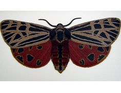 Virgo Moth - Gallery of Polymer Clay Jewelry by Marie Davis Board:   Polymer Clay, Resin, Beads etc...