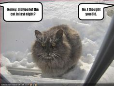 In honor of all the snow (the snow that is giving me this beautiful 2 hour delay this morning) I will be pinning lots of snow related things. Most will also relate to cats.