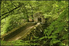 Hermitage bridge of Inver, Scotland. I'd like to see this somedya