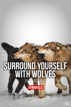 gymaaholic: Surround Yourself With Wolves Not sheeps. http://www.gymaholic.co