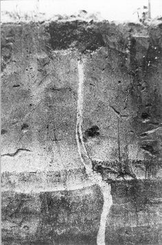 Earthquake fissure filled with intruded sand, formed at the time of the New Madrid earthquake. Mississippi County, Arkansas, 1904.