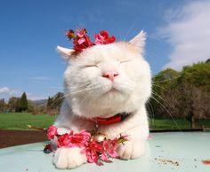 zen cat being zen