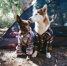 Camping with dogs #love