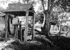 Martinique. Au bord de la route vers Moutte et la Trinité, près Fort-de-France (Déc. 1894). Photogr. Salles ; photogr. reprod. par Molténi ?