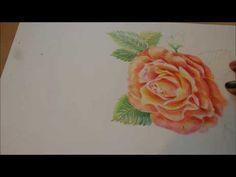 Рисуем розу акварельными карандашами  карандашами