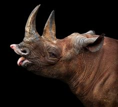 Rhino by Klaus Wiese
