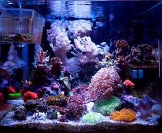 RollaJase - 2014 Featured Nano Reefs - Featured Aquariums - Monthly Featured Nano Reef Aquarium Profiles - Nano-Reef.com Forums