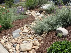 1000 images about swales are swell on pinterest rain for California native landscape design