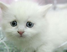 """Who can be stressed after sitting in a box full of fluffy, clumsy, playful kittens?  No one, that's who — and we have the video to prove it.  In the short clip above, appropriately titled, """"Kitten Therapy: The Prescription for Stress,"""" unsuspecting passers-by are approached to take part in a short stress therapy session inside of a large enclosed area.  What begins as a headphone-guided meditation soon turns into playtime with a troop of adventurous kittens. The video was created by the ..."""