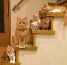 Adorable furry family :)
