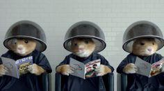 Kia hamsters getting their hair done