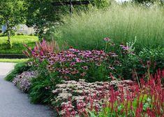 backyard gardening tips How To Grow Prairie Garden, Meadow Garden, Garden Pictures, Garden Photos, Small Gardens, Outdoor Gardens, Landscape Design, Garden Design, Stipa