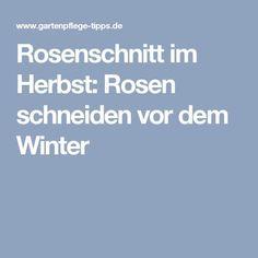 Rosenschnitt im Herbst: Rosen schneiden vor dem Winter