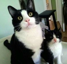 Found kitten turned out to become best friend and look-alike!