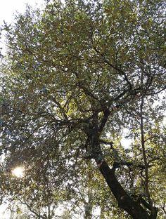 Luz a través del Árbol