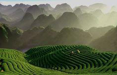 the tea garden, chian tsun-hsiung, taiwan