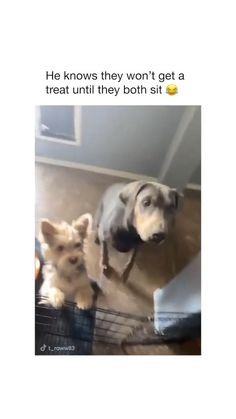 Cute Funny Dogs, Cute Funny Animals, Funny Pics, Funny Memes, Hilarious, Baby Animals Pictures, Cute Animal Pictures, Funny Animal Jokes, Animal Memes
