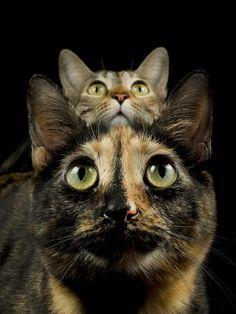 Feline symmetry -