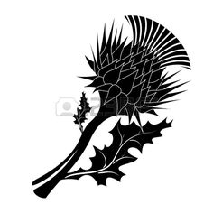 Decorative vector thistle on white background Stock Vector