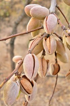 Water Footprint of Seeds vs Nuts – 88 Acres Nutrition Diet Plan, Tomato Nutrition, Nutrition Program, Kids Nutrition, Chickpeas Nutrition, Complete Nutrition, Herbalife Nutrition, Health Benefits Of Almonds, Almond Benefits