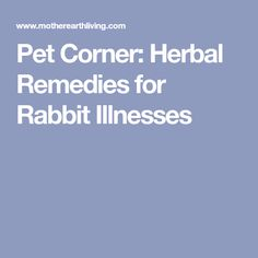 Pet Corner: Herbal Remedies for Rabbit Illnesses