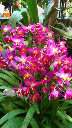 Organized by  : OSM ( Orchid Society of Malaysia)   Date  : 23 rd  November 2012 - 2 nd  November 2012  Time...