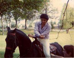 Elvis & walking horse Bear