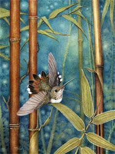 Hummingbird by Cirocco Moody