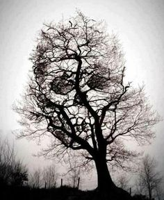 an image of a skull found in a tree. great timing!