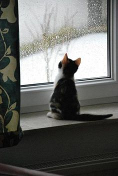 just watching the snow fall ... what a darling little kitty