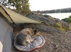 Ruffwear Highlands Bed™ for Backpacking & Camping Dogs. Includes the stuff sack. 14oz