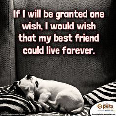 """""""If I will be granted one wish, I would wish that my best friend could live forever."""""""