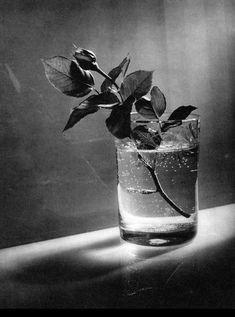 tomar foto de plantas y haces de luz para ampliar