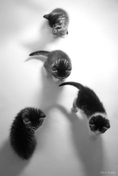 Four Cats Click here to stop your cats from spraying.