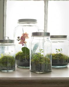 "WOODLAND TERRARIUM: ""It may be gray outside, but it's always green in these moss terrariums. We used kitchen canisters, which are readily available and inexpensive; their tight-fitting lids capture the condensation the plants require to thrive.""                                                                                                                                                                                 More"