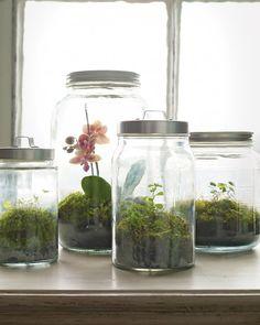 <3  little garden to grow in my kitchen
