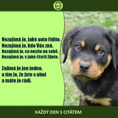 citaty-nezajima-je-jake-auto-ridite Animals And Pets, Cute Animals, Quotations, Qoutes, Dog Quotes Love, Light Of Life, Dog Photos, I Love Dogs, Favorite Quotes